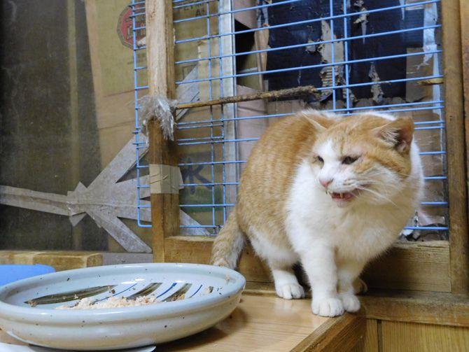 今日のゲストさん(ノラ猫)