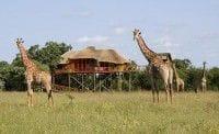 パズル ツリーハウス ゲームロッジ(南アフリカ)