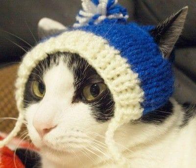 にゃんこ用手編みポンぽん帽子 青