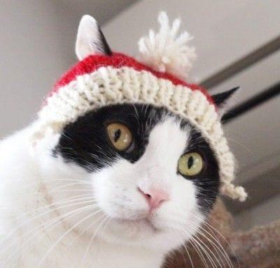 にゃんこ用手編み帽子 ねこニット帽 赤